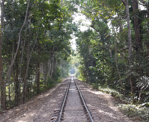 Train tracks in Srimangal